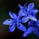 bloom is here! by yvesrossetti
