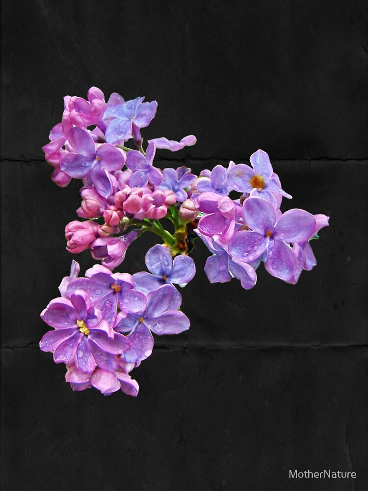 Lilacs - Perfumed Dreams by MotherNature