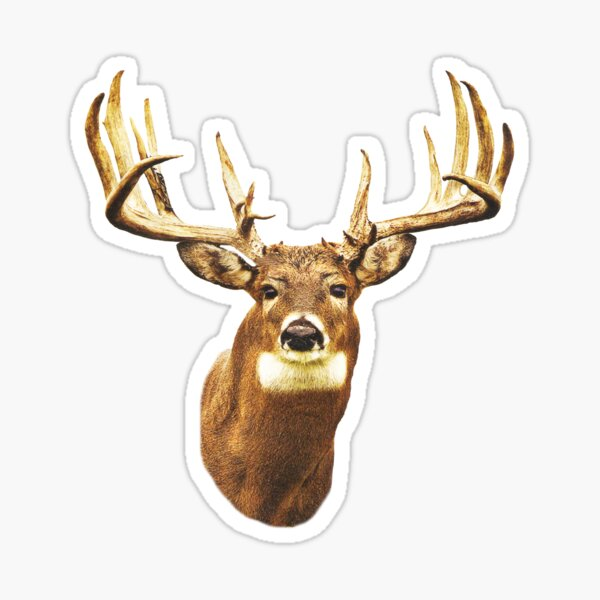 Mule Deer T-Shirt Sticker