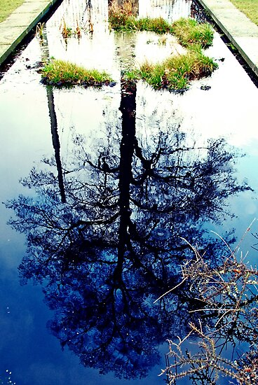 Reflecting by heinrich