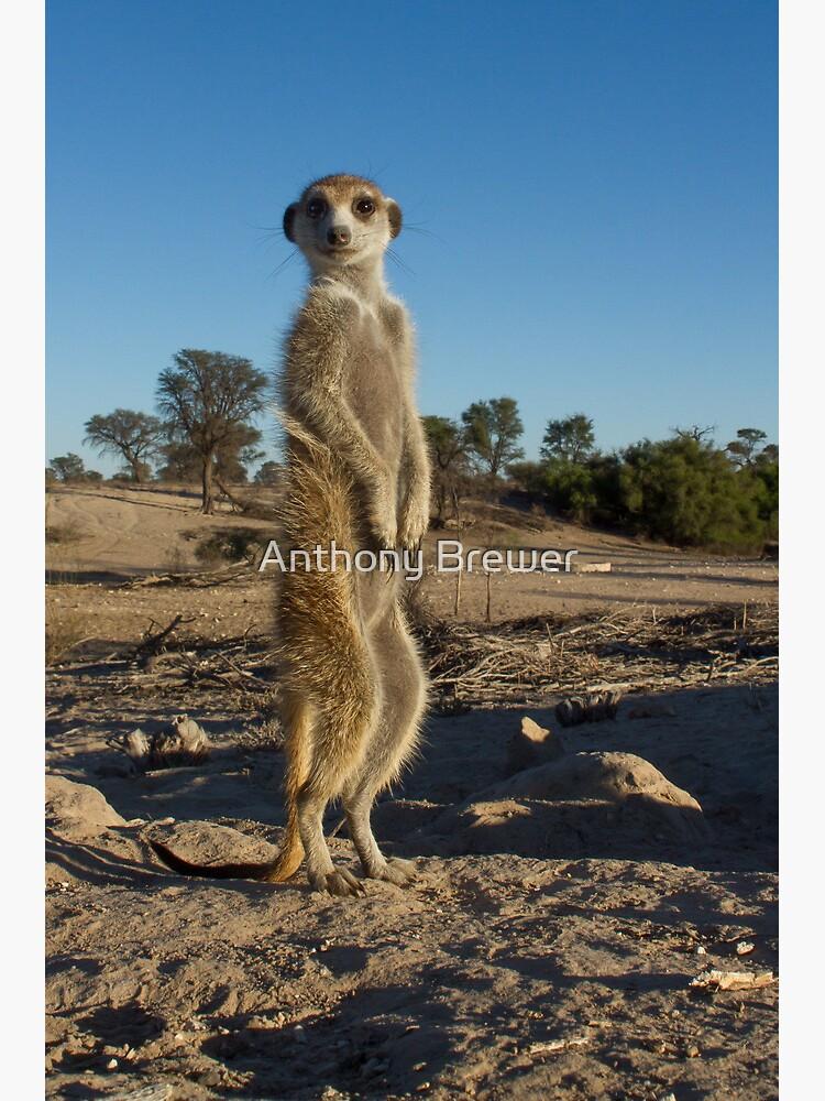 Standing tall by dailyanimals