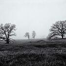 Morning Fog Paradise California 1985 by Jeffrey  Sinnock
