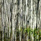 Ghost Forest by Tibby Steedly