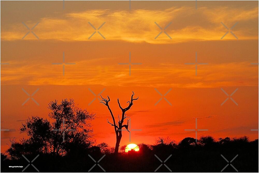 KRUGER SUNSET - KRUGERPARK SONSONDERGANG by Magriet Meintjes