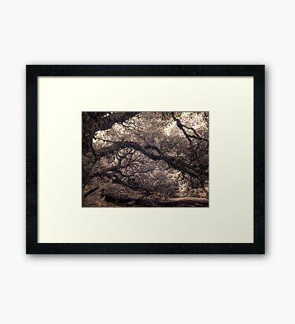 Pencil Pine Walk Framed Print