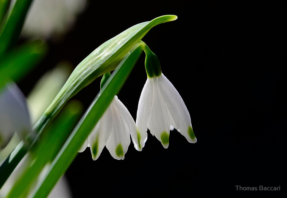 Spring Is Just Around The Corner by TJ Baccari Photography