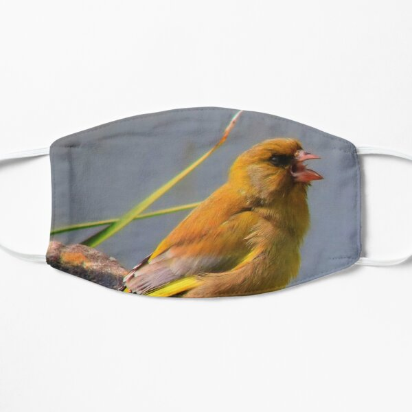 Water Bowl Face Masks Redbubble