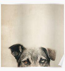 Half Dog Poster