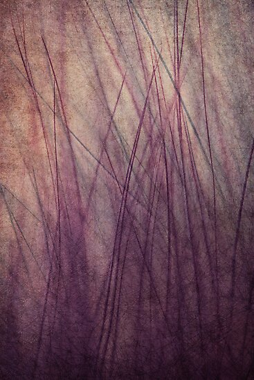 Feathered II by Sharon Johnstone