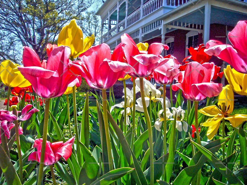 Tulips by FrankieCat