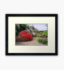 A New Zealand Garden Framed Print