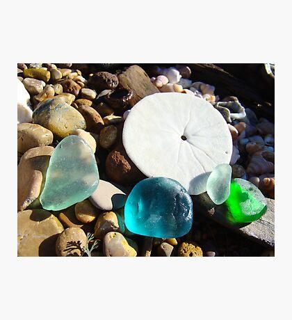 Beach Rock Garden Art Prints Seaglass Sand Dollar Photographic Print