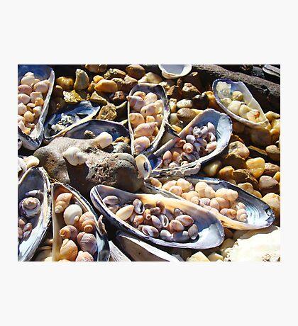 Sea Shells Art Prints Coastal Beach Seashell Photographic Print