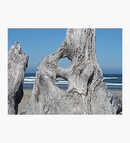 DRIFTWOOD art prints Ocean Coastal Shore Photographic Print