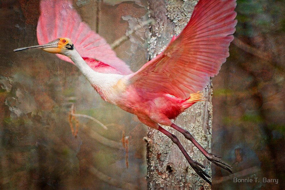 Flight of the Roseate Spoonbill by Bonnie T.  Barry