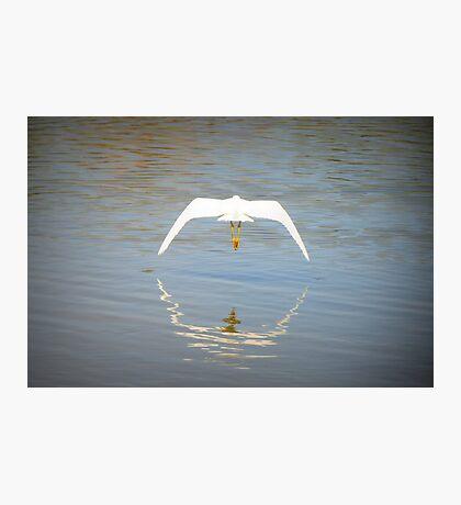 Snowy Egret ~ Farewell Flight Photographic Print