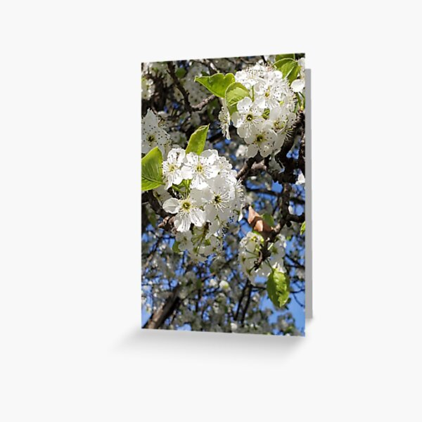 Glorious tree blossoms and blue skies Greeting Card