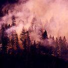 Purple Haze by John Poon