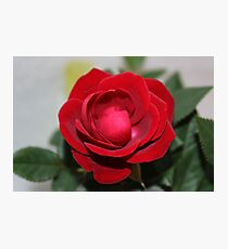 Rose Red Photographic Print