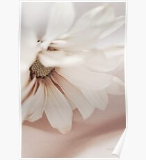 ...daisy softness......... Poster