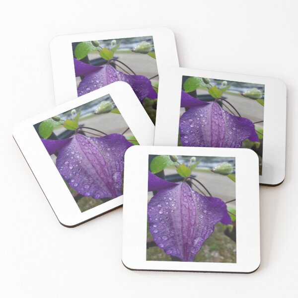 Purple Clematis with Raindrops - close up Coasters (Set of 4)