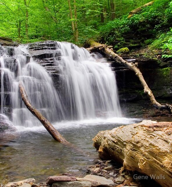 Wyandot Falls and Fallen Timber by Gene Walls