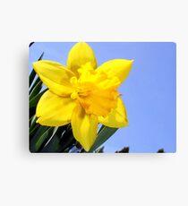 Wild Daffodil* Canvas Print