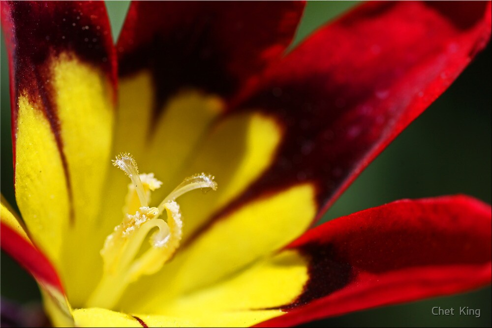 Red And Yellow by Chet  King
