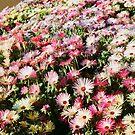Toowoomba Carnival of Flowers by R-Walker
