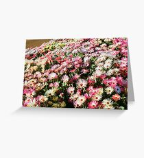 Toowoomba Carnival of Flowers Greeting Card