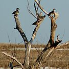 Family of Four Woodies by Carla Wick/Jandelle Petters
