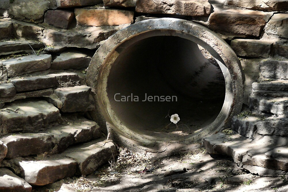 Determined by Carla Jensen
