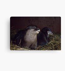 Otter holt Canvas Print