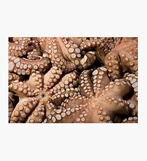 Fresh Octopuses  Photographic Print