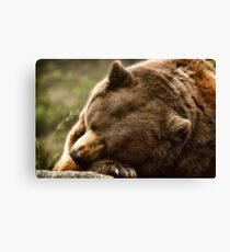 Lazy Bear  Canvas Print