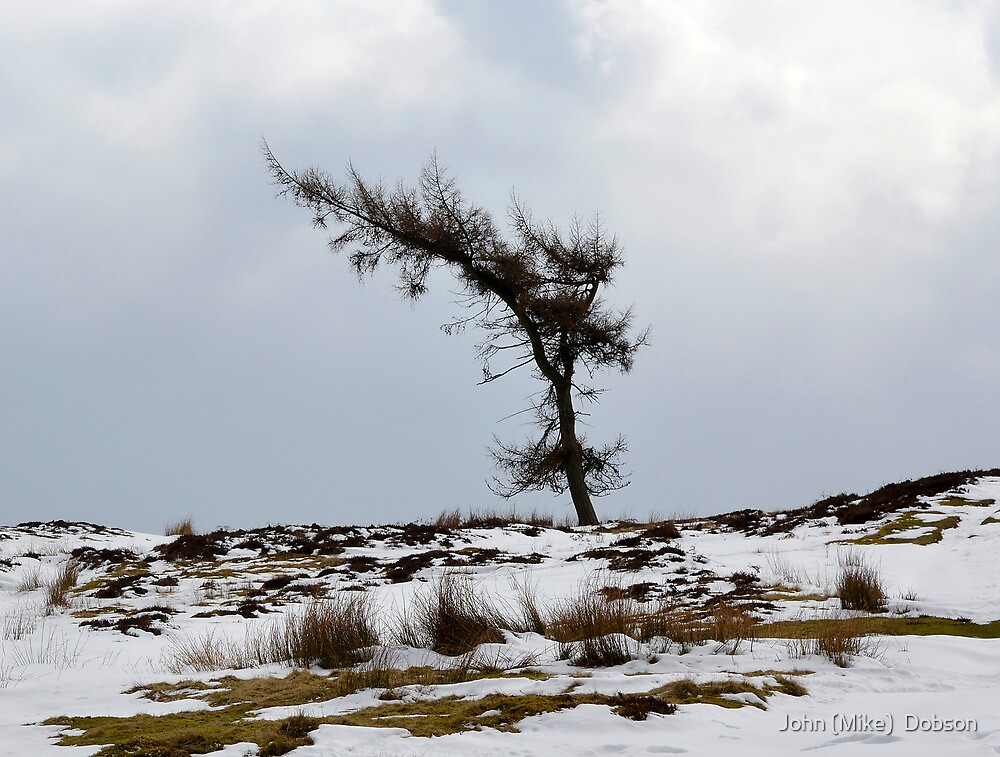 Shaped by the wind by John (Mike)  Dobson