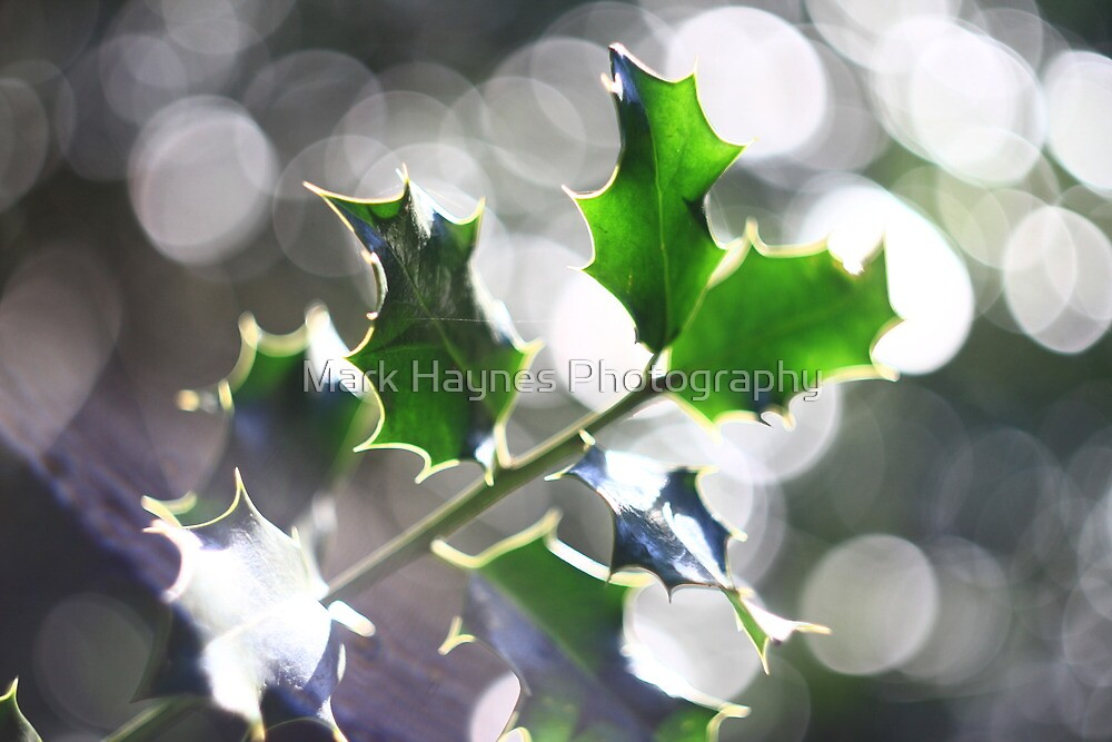Holly Leaf Bokeh by Mark Haynes Photography