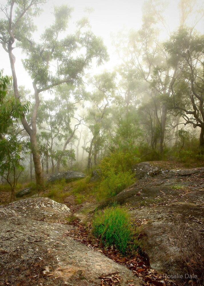 Morning mist #2, Hawkins Lookout ~ Wiseman's Ferry  by Rosalie Dale
