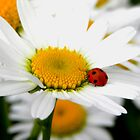In Love with a Ladybug and a Daisy by Tisha Clinkenbeard