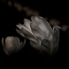 AN opened heart .... by 1morephoto