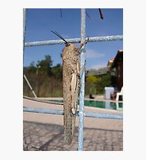Locust On A Wire Fence Photographic Print