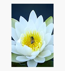 Lily and the Bee Photographic Print