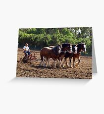 Four Clydesdales working in Sunshine Greeting Card