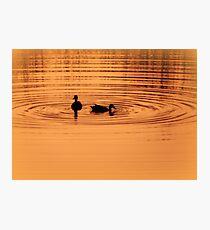 Ducks at sunset Photographic Print