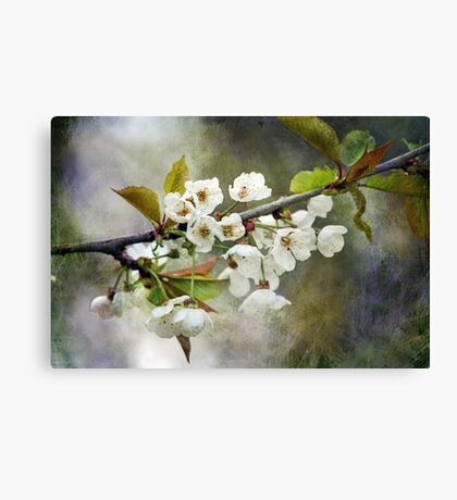 Textured Blossom Canvas Print