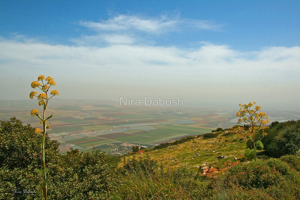 Heaven on Earth by Nira Dabush