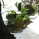 Mossy Rocks on Stradbroke by hans p olsen