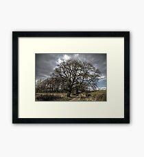 Rural Tree Framed Print