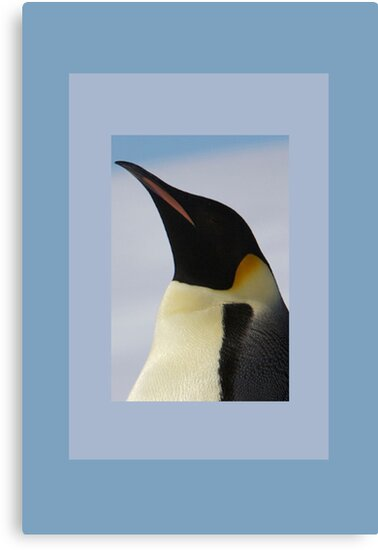 Penguin Portrait by Catherine Hamilton-Veal  ©