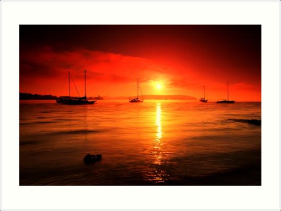 Morning Glory by Arfan Habib